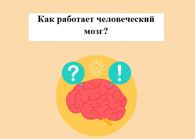 Работа мозга человека