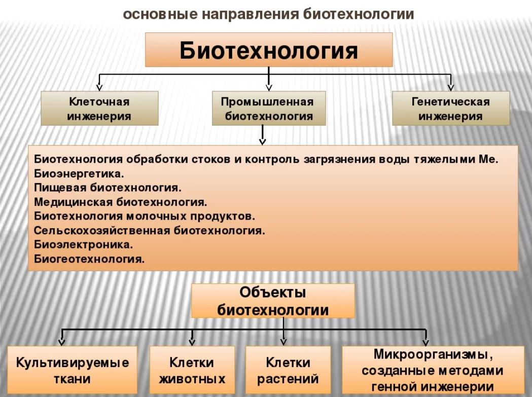 Основные направления биотехнологии