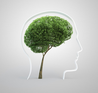 Советов по написанию отличной дипломной работы по экологии